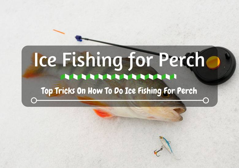 Ice fishing for perch top tricks on how to do ice for Fishing tips and tricks